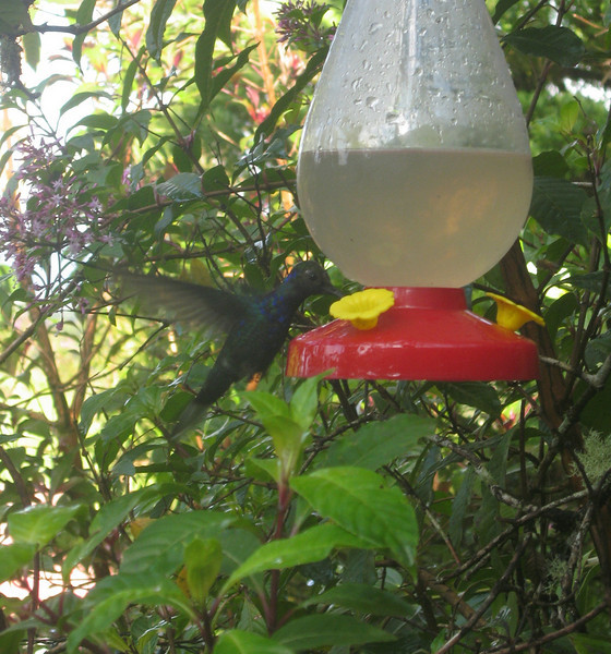 Costa Rica 08(2) 022a.jpg