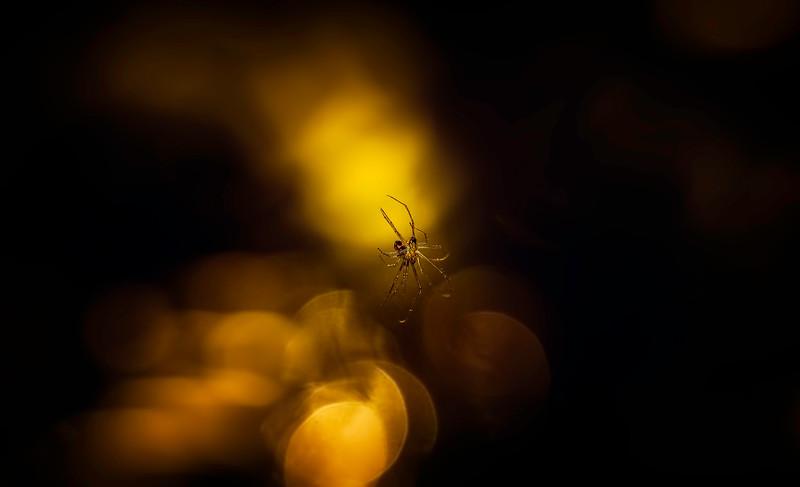 Spiders-Arachnids-116.jpg