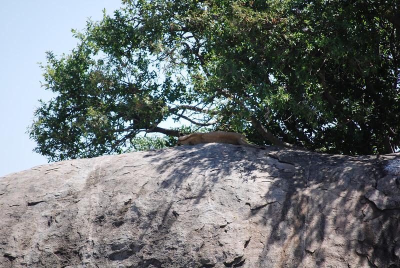 Serengeti (164).JPG