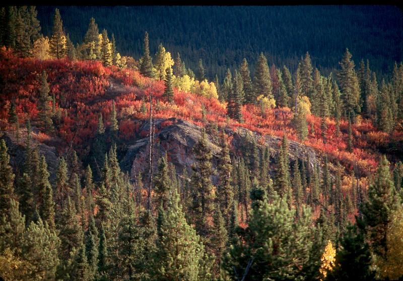 Canada - Alaskan Hwy.jpg