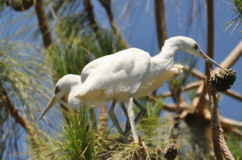 One Two Egret.JPG