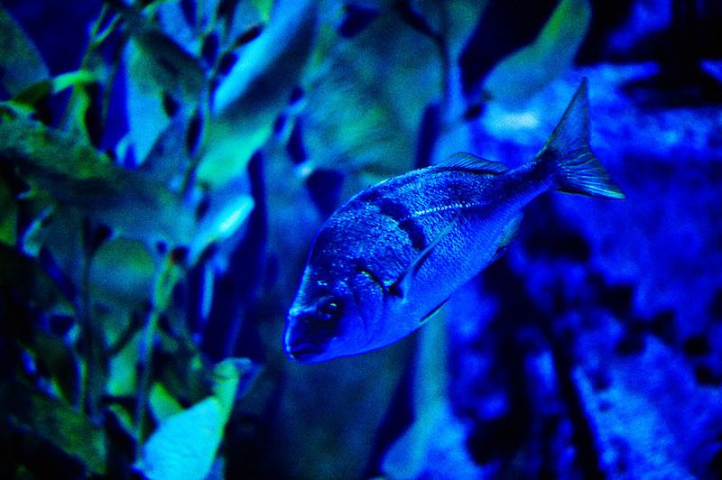 LB-Aquarium-II_18.jpg