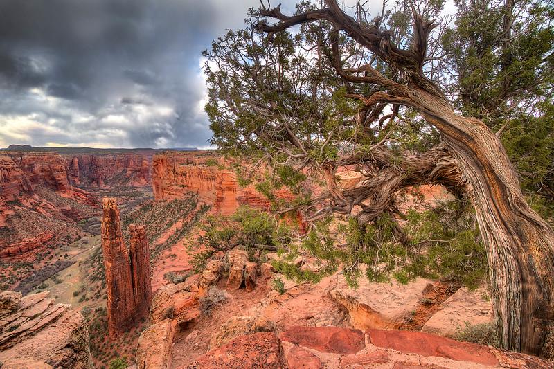 tree over spiderock.jpg