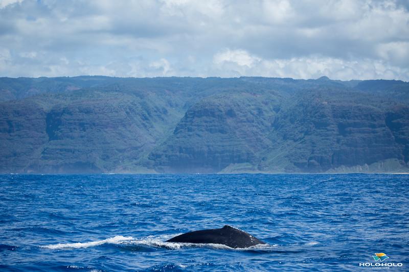whales-leila-72.jpg