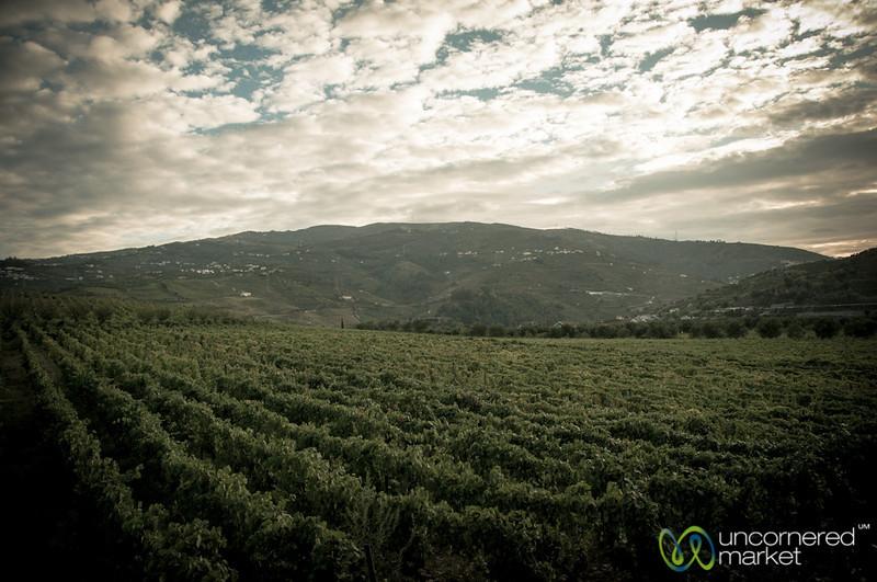 Quinta de Pacheca Vineyard - Douro Valley, Portugal