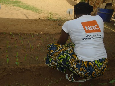 NRC supports IDPs in agriculture
