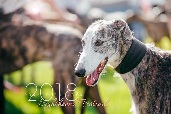 Donaueschingen Sighthound Festival 04/08/18