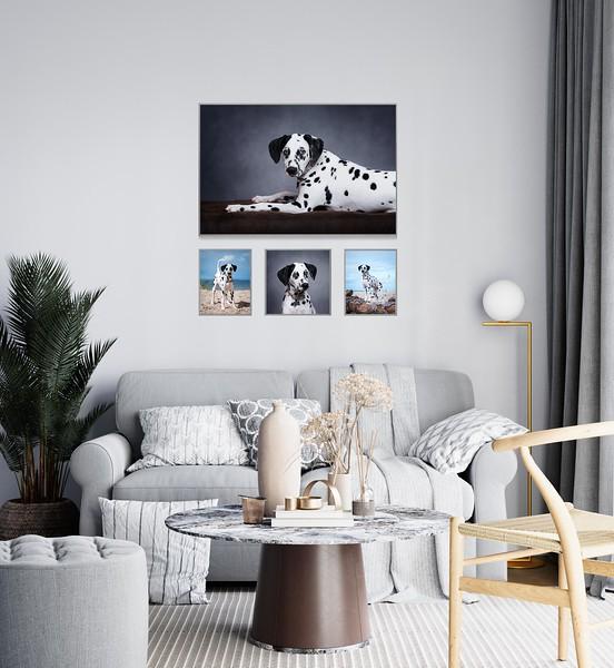 Dalmatian-Portrait-Installation.jpg