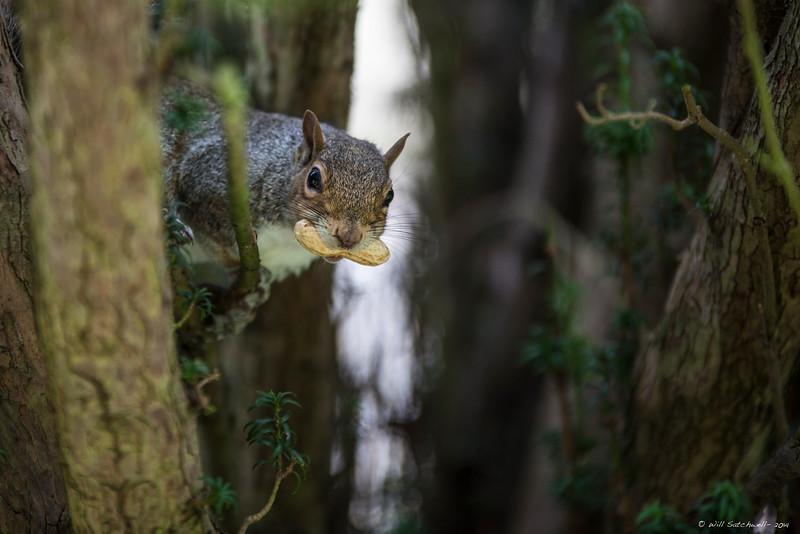 Squirrels & Dorking Church - 14th September 2014