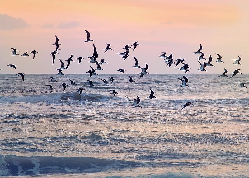 beach birds final.jpg