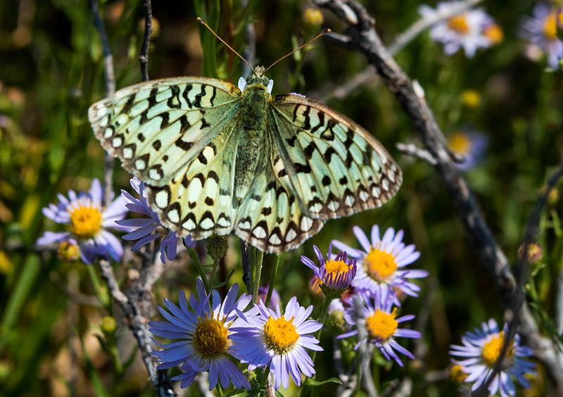 Butterfly 33.jpg