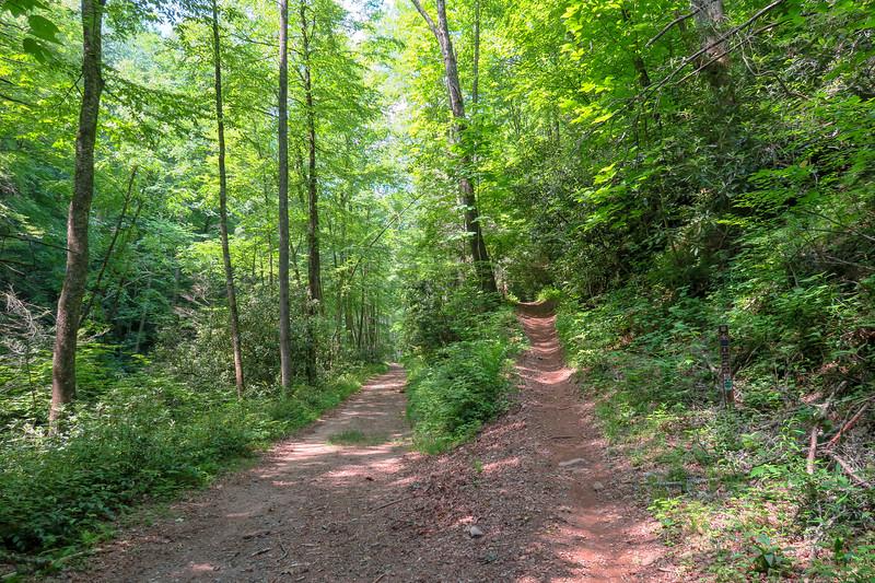 Forest Road 142-Fletcher Creek Trail Junction -- 2,430'