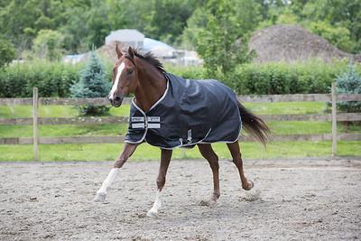 Horseware-Western