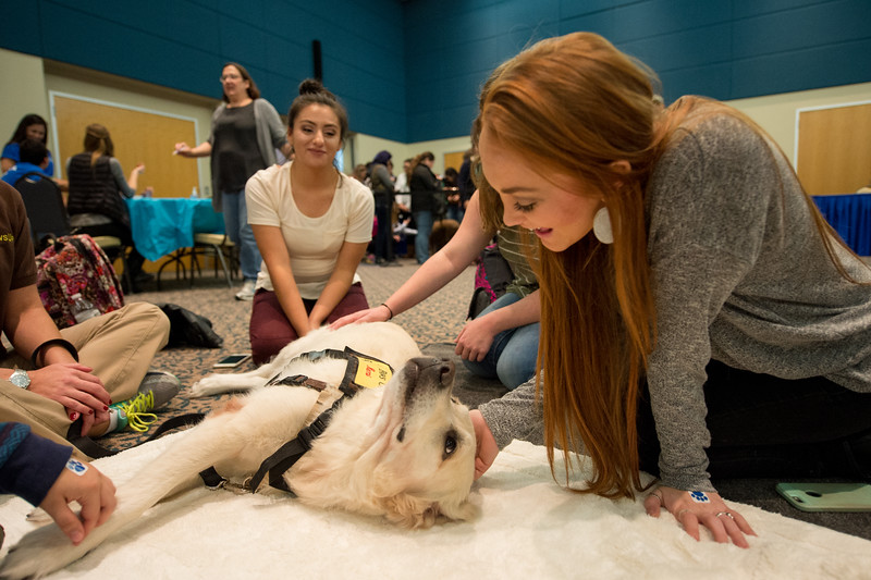 Kaylee Brown pets therapy dog Remi during the Paws on the Island event.