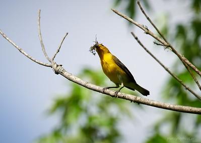 Bird walk at Seven Islands