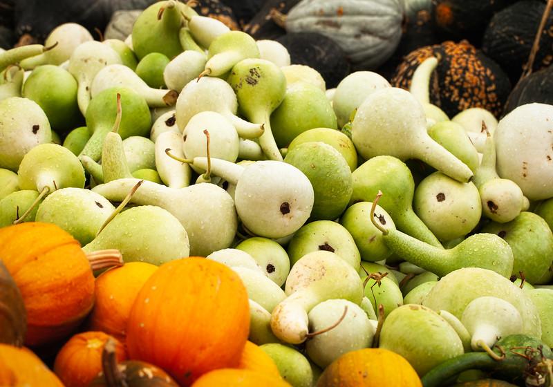Gourds 1, Half Moon Bay, California, 2010