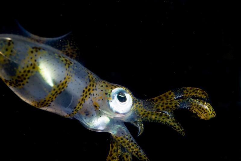 squid 9.jpg