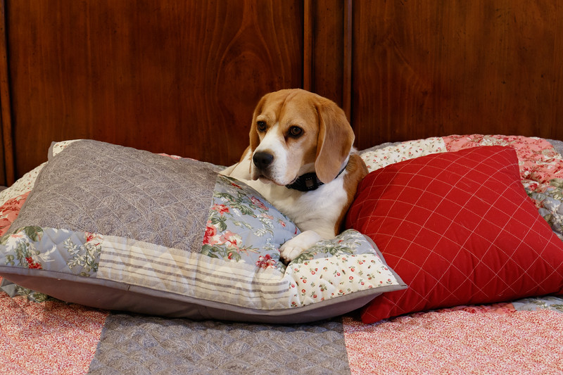 Long before the term came into vogue in the world of electronics, Puppies leveraged the powers of  soft pillows to recharge their batteries.    You can't get any more wireless than that.