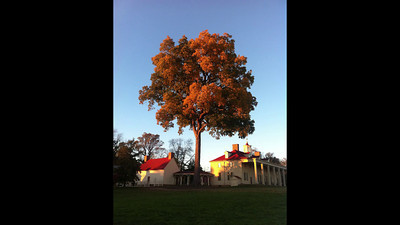 Mount Vernon Pecan Removal 2014 Time Lapse