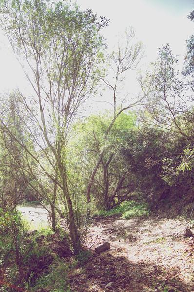 Week 8 Buchanon Canyon 3.jpg