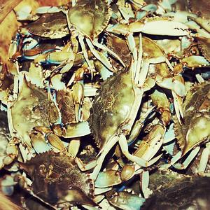 Beer & Crabs