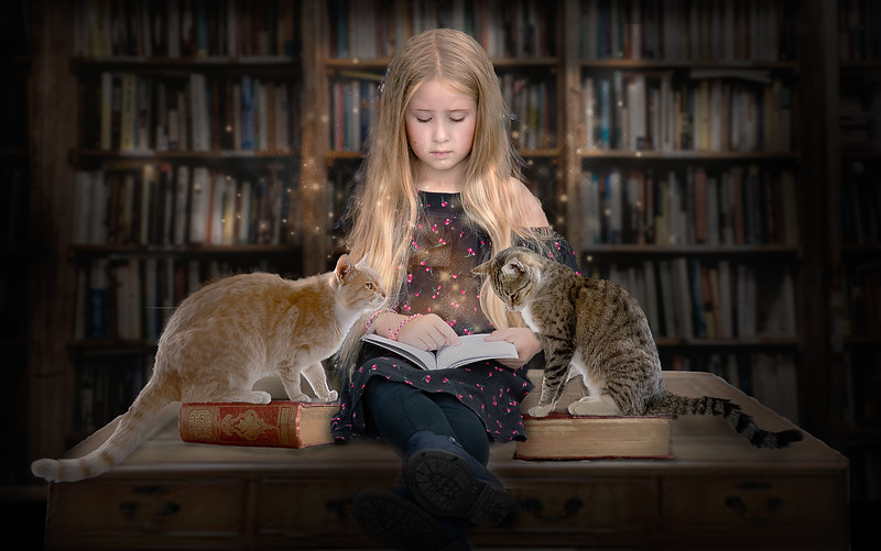 Kimberley Cats 3.jpg