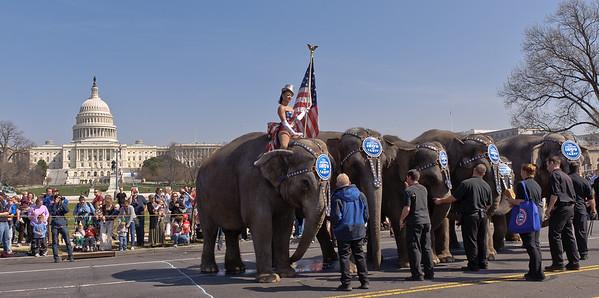 DC Elephant Walk