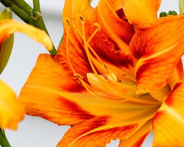 07/16/16 Flowers