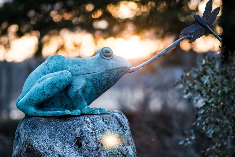 Frog 2.jpg