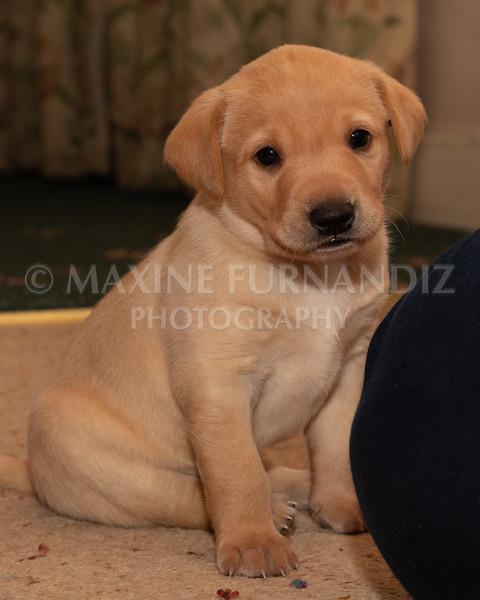 Weika Puppies 2 Mar 2019-8480.jpg