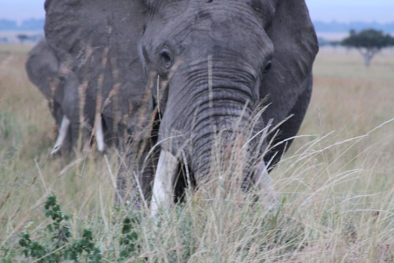 Kenya Part2 '15 263.JPG