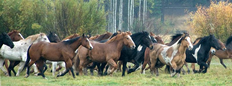 Horses-all-together-now_KateThomasKeown_DSC2615.jpg