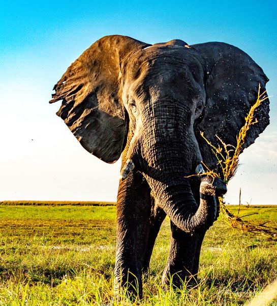 2019 Africa FB Select-77.jpg