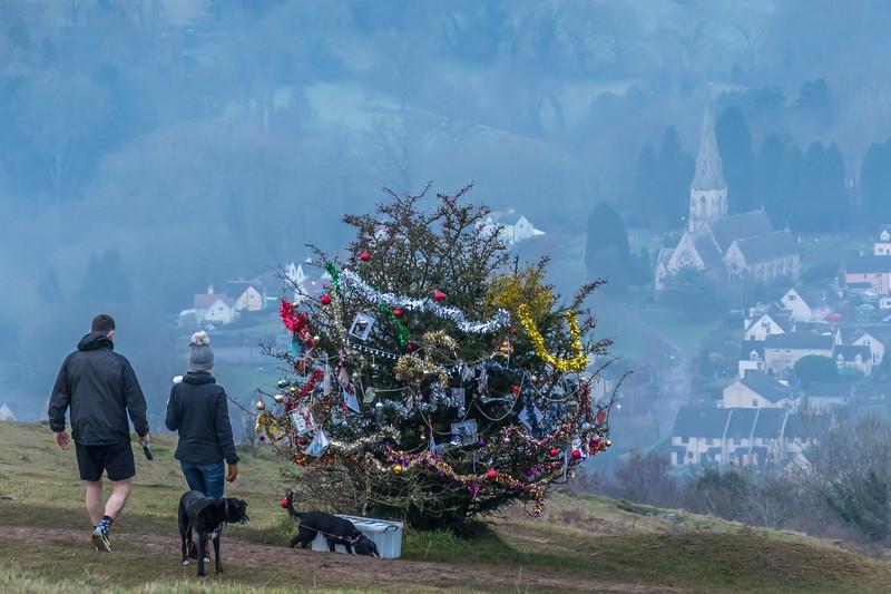 Dog's Christmas Tree-7573.jpg