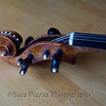 Lewis Thompson Fiddle