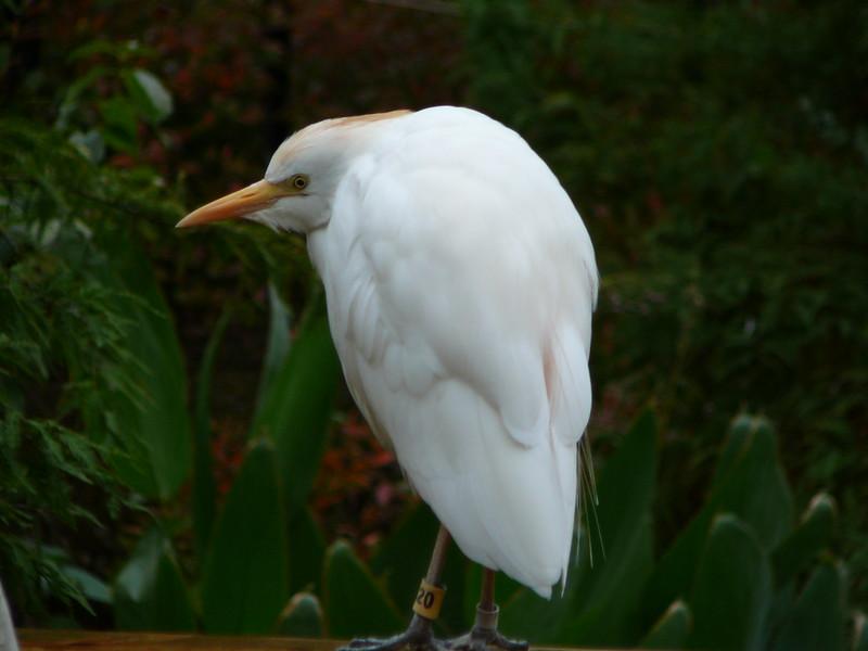 Grouchy bird