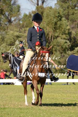 Class 19: Small Show Pony