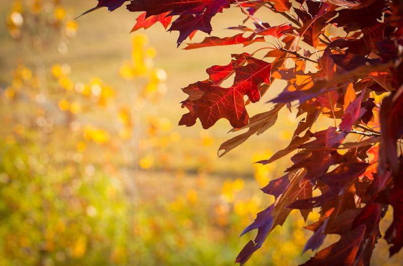 20151024-Fall Colors-81.jpg