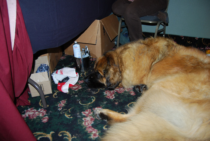Midas snoozing behind the booth.