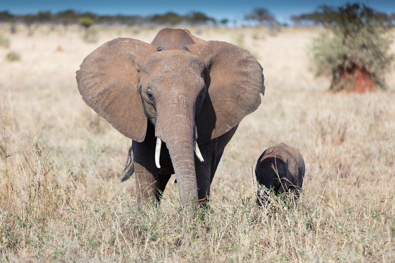 Africa - 102016 - 7843.jpg