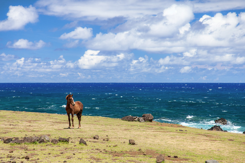 Easter Island-19.jpg