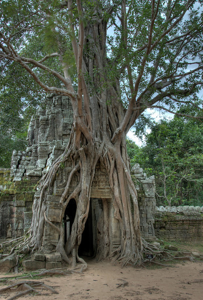 Tree roots covering the doorway in Ta Som
