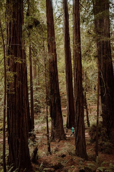 Forest_City_Photographs_Honeymoon_Califonia_San_francisco_Yosimite-52.jpg