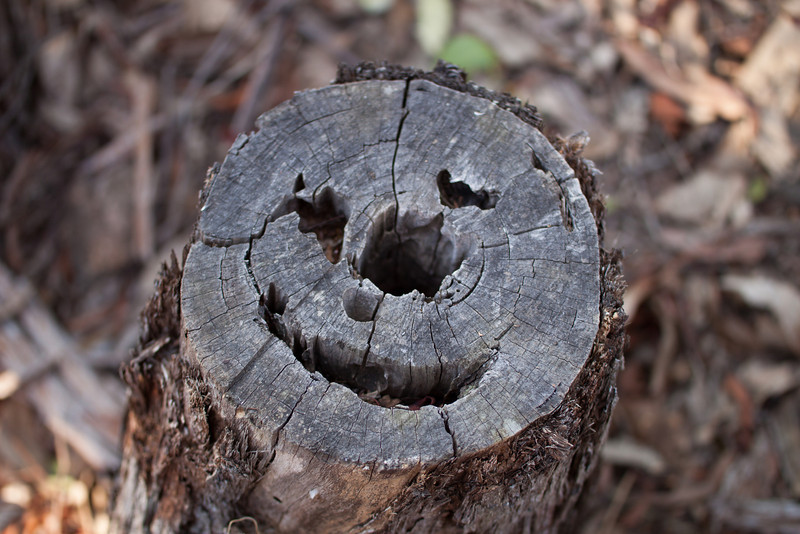 Even the trees smile at Frog