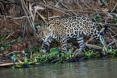Brazil: The Pantanal & Rio de Janeiro
