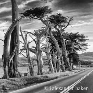 California Coast Monochromes 2014