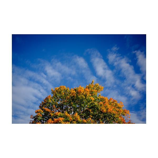 283_Autumn_10x10.jpg