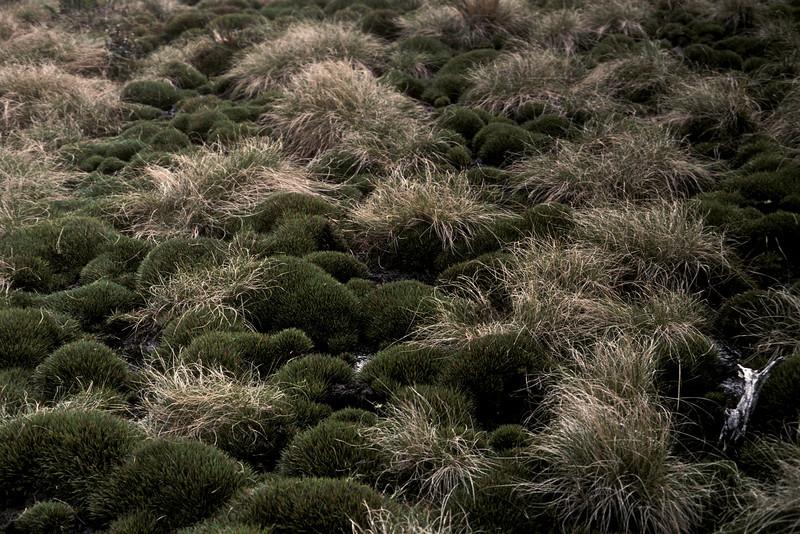 Greensword Bog, 5th anniversary(?); photo developed December1986; photo by (unknown);(photoID:bhg002037)