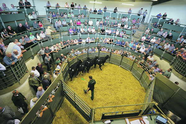 BAKEWELL AUCTION MART 14/7/2014