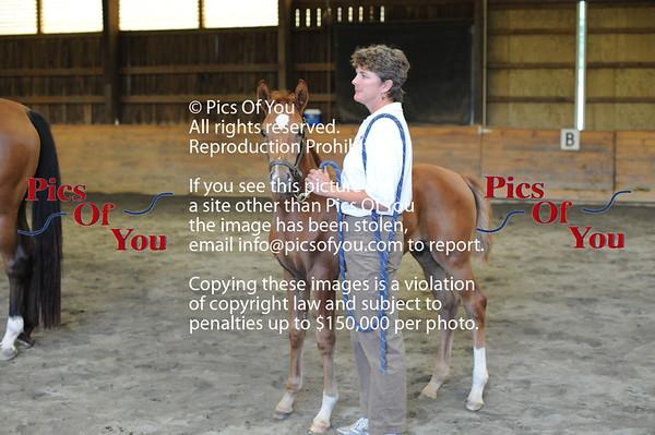 Foal entry 4
